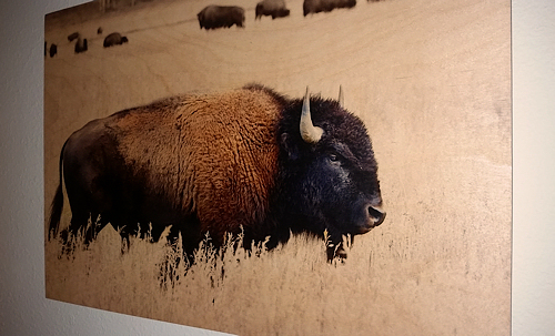 Bison Printed on Wood